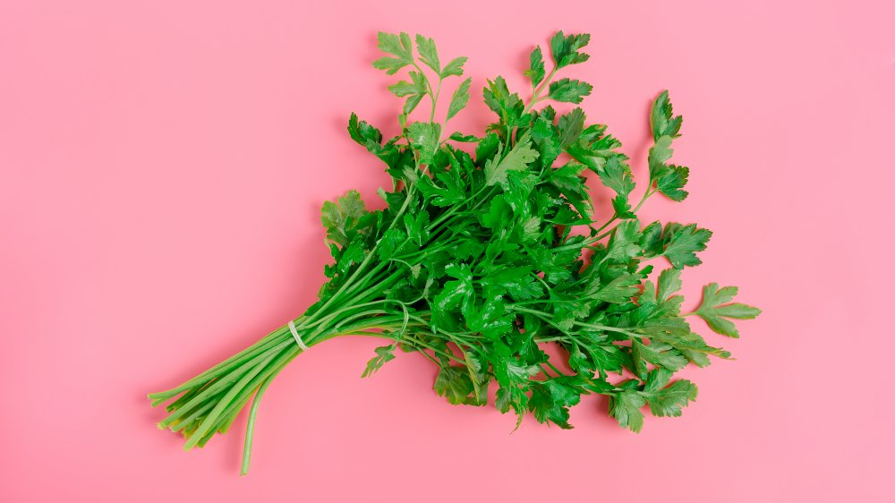bunch of parsley on pink backdrop