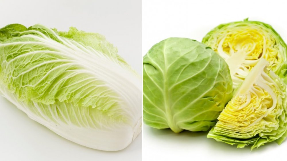 The Important Difference Between Napa Cabbage And Regular Cabbage