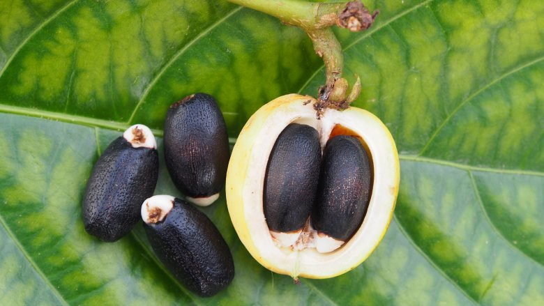 Part Ii More Fruit Of Poisonous Tree >> The Most Dangerous Fruits In The World