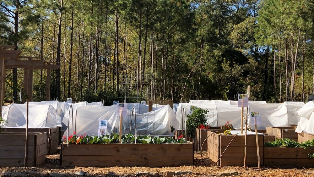 Free food forest in Atlanta
