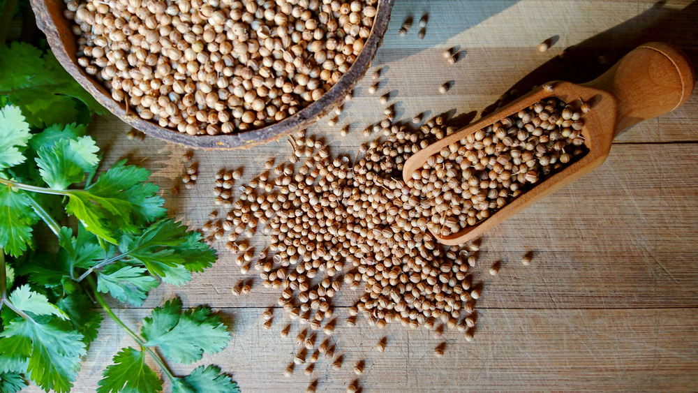 Coriander seeds and cilantro leaves