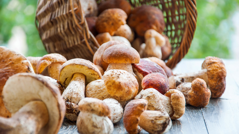 When you eat mushrooms every day, this is what happens to your body